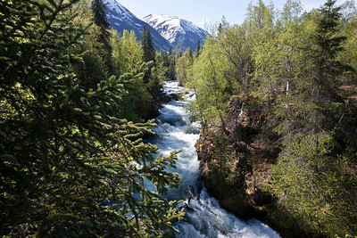 The Russian River outside Cooper's Landing Alaska.   A prime salmon stream in season