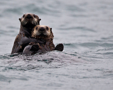 Hang on tight junior, you never know what those guys in the boat are going to do next