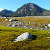 Reclaimed land at Baird Glacier