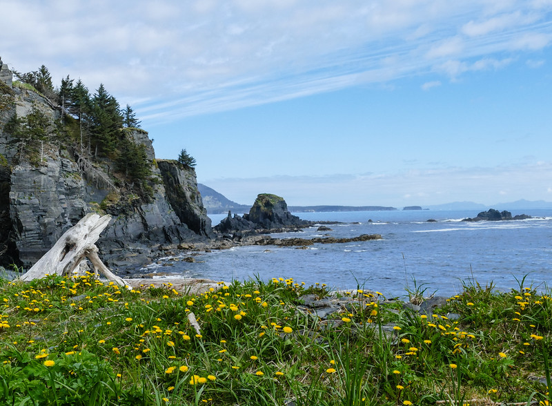 Yellow wildflowers edge a rugged beach on Kodiak Island.