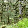 kodiak-island-hike-9