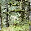 kodiak-island-hike-10