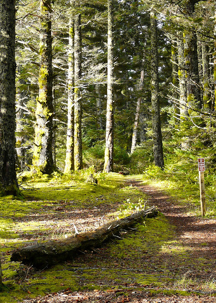 On Kodiak Island, a trail winds through the green forest at Fort Abercrombie State Historical Park.