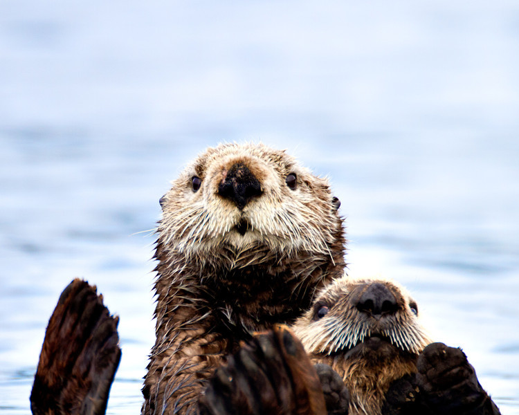 Alaska  bears, eagles, otters, and more