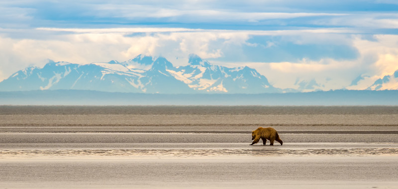 Bear In Spectacular Scenery