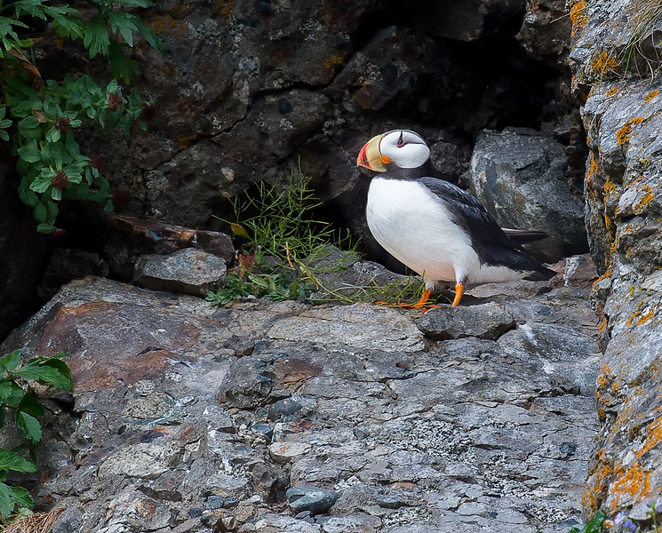 Puffin Pause