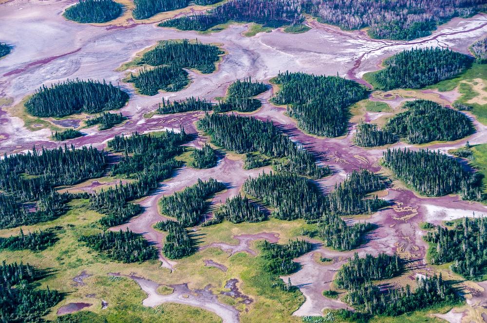 UNESCO World Heritage Site #275: Wood Buffalo National Park