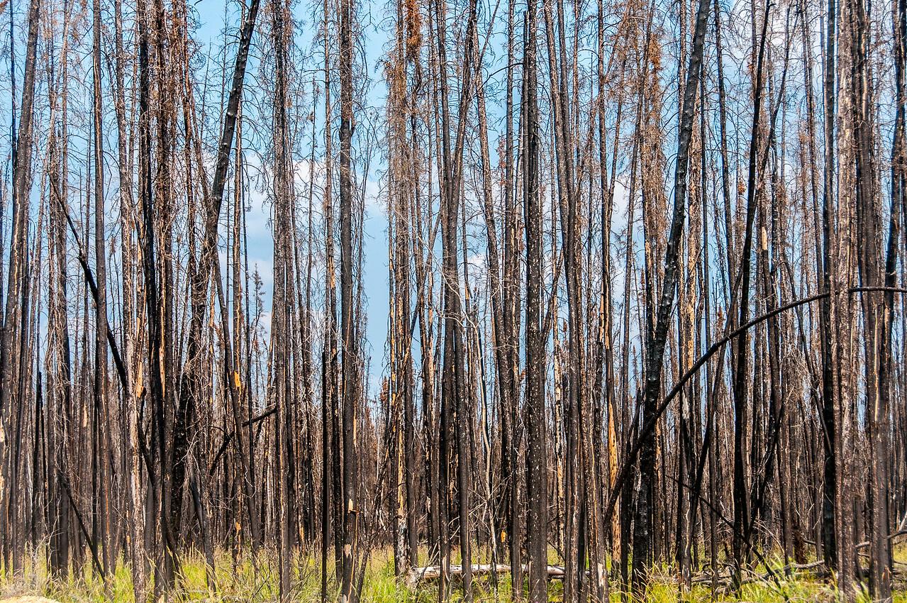 Wood Buffalo National Park - Alberta, Canada