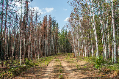 Wood Buffalo National Park - Alberta, Canada