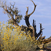 Treescape 2 in Arches National Park