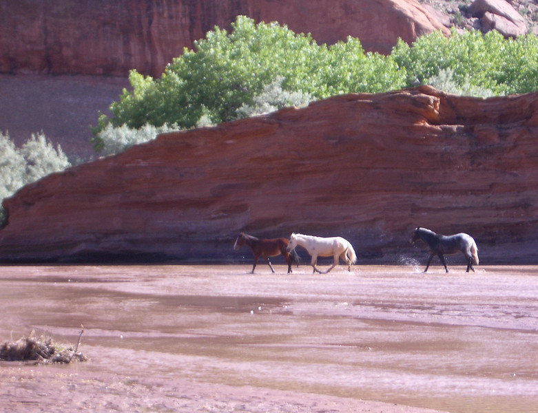 Horses in the Canyon de Chelly, Arizona