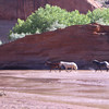 Horses in Canyon de Chelly photo by Donna Hull jpg 2304x1728