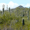 Hike at Saguaro National Park West in Tucson, Arizona