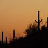 saguaro-west-tucson-2