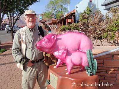 Endangered Pink Peccarys (AKA javalinas)