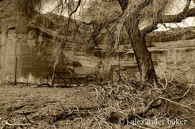 Deadfall Branches, Canyon De Chelly