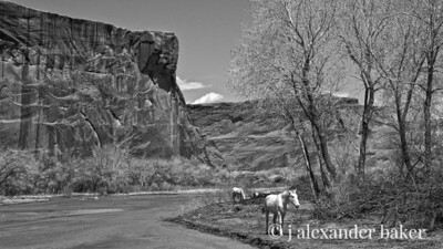 White Horses, Canyon de Chelly