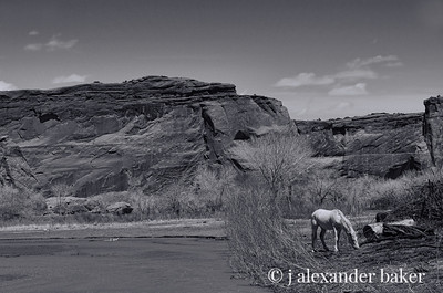 White Horse, Canyon de Chelly B&W 2