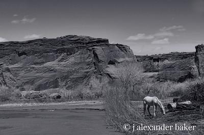 White Horse, Canyon de Chelly B&W 2