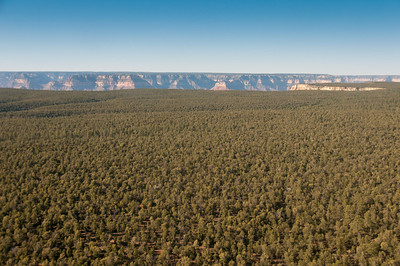 Forest canopy in Grand Canyon National Park in Arizona, USA