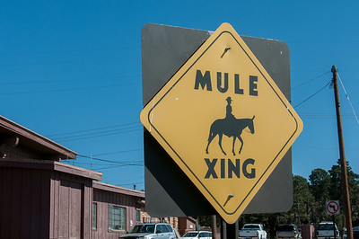 Mule crossing sign near Grand Canyon National Park in Arizona, USA