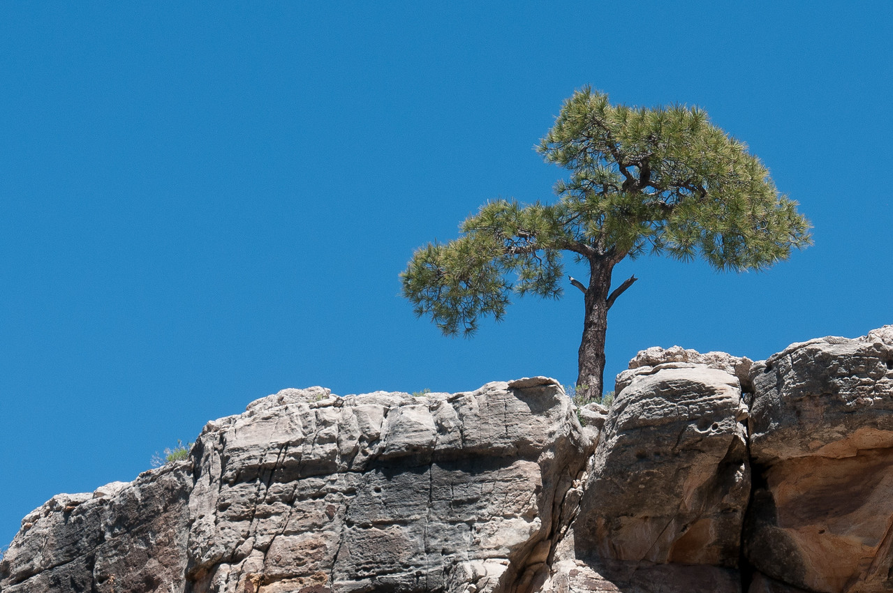 Tree at the top of cliffs in Grand Canyon National Park in Arizona, USA