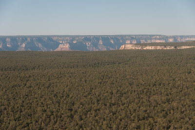 Thick forest canopy in Grand Canyon National Park in Arizona, USA