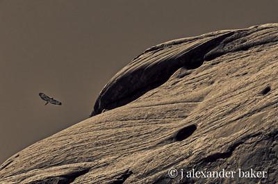 Hawk, Monument Valley, Navajo Nation USA
