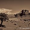 Desert Juniper, Monument Valley, Navajo Nation