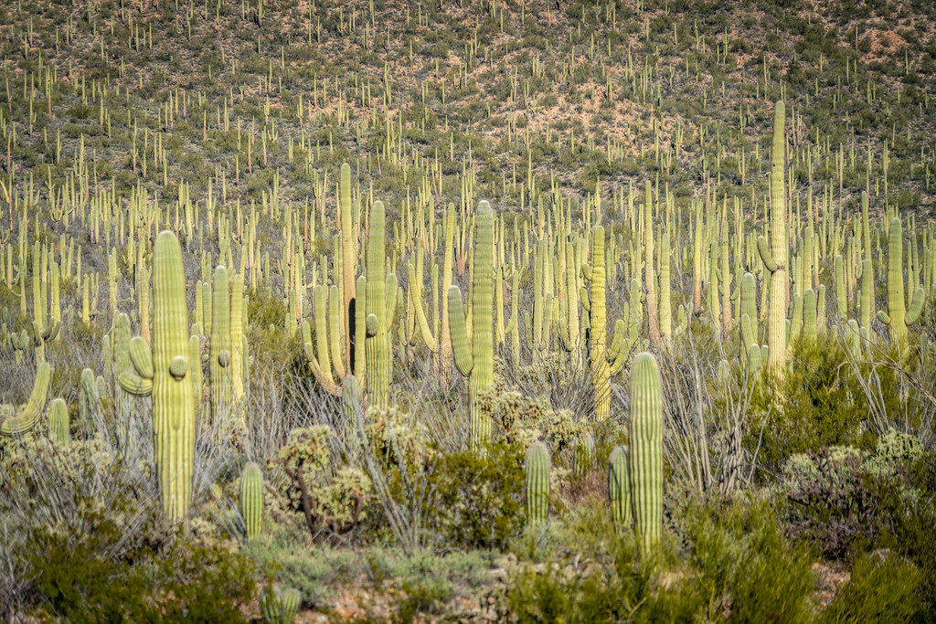 5 Educational Day Trips You Can Make From Tucson, Arizona
