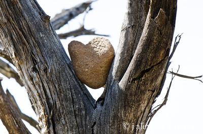 The Heart of Sedona - found along the trail on Airport Mesa near the vortex, whoooooo