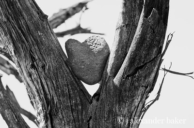 The Heart of Sedona in Black and White