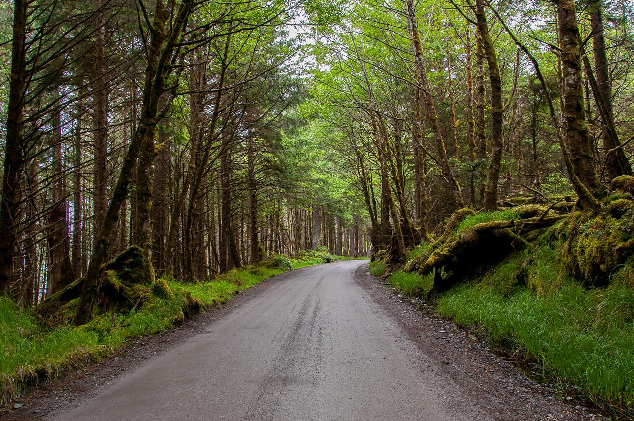 Tow Hill hiking trail in Naikoon Provincial Park, Haida Gwaii, British Columbia, Canada