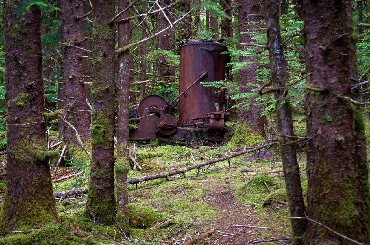 Swamp Forest in Tow Hill Ecological Reserve, Haida Gwaii, British Columbia