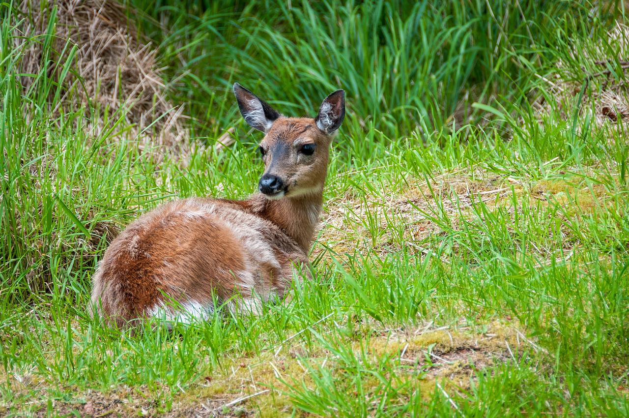 Tow Hill Ecological Reserve, Haida Gwaii, British Columbia