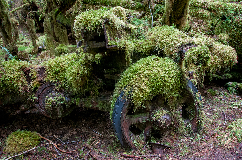 Moss Covered Machinery in a Forest in Haida Gwaii, British Columbia