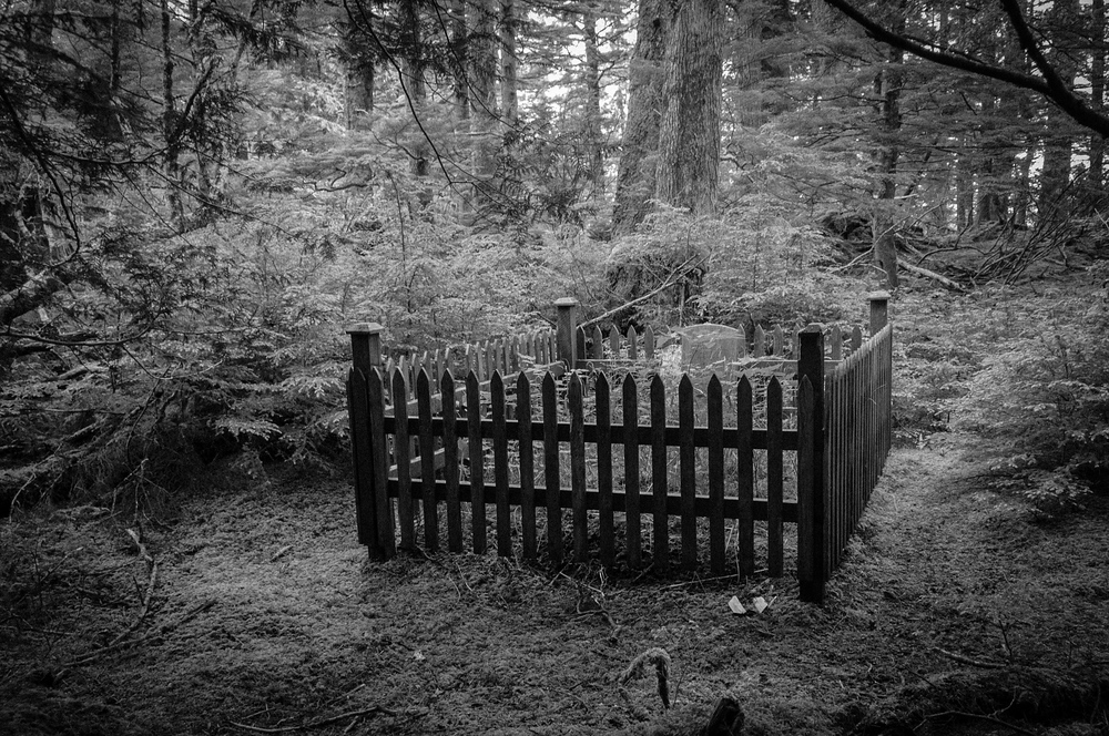 Forest Grave Site in Haida Gwaii, British Columbia