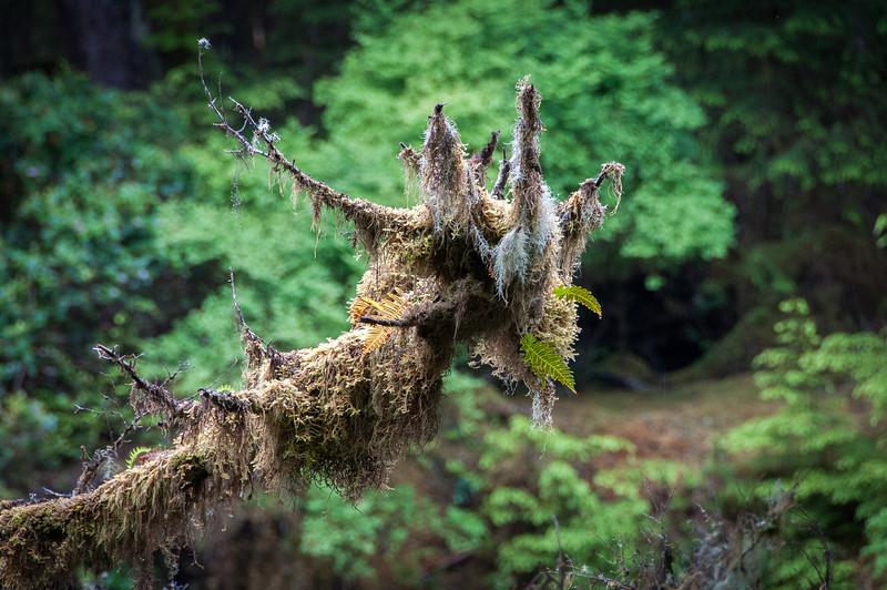 Inside Naikoon Provincial Park in Haida Gwaii, British Columbia