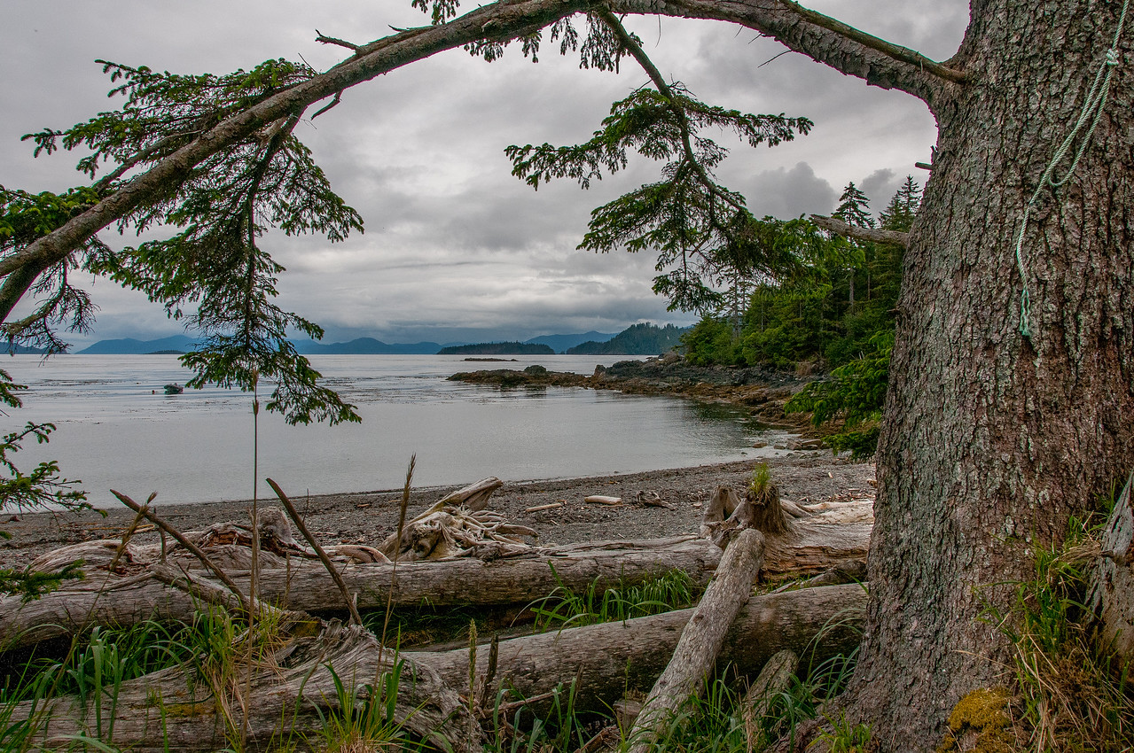 Tow Hill Ecological Reserve, Haida Gwaii, British Columbia