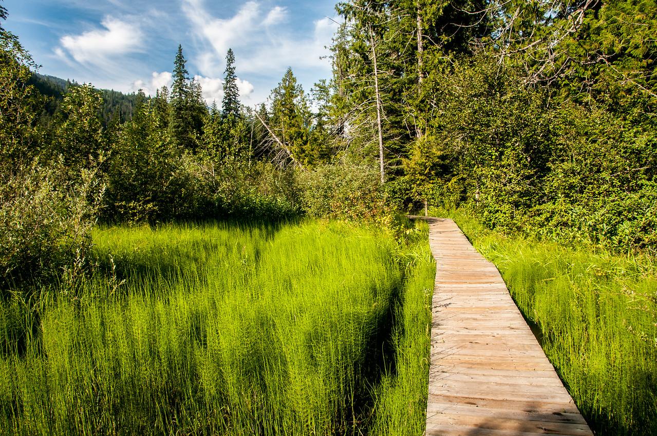 Wooden trail in Mount Revelstoke National Park, Canada