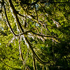 backlit branches Cathedral Grove