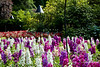 1006_ButchartGardens_012