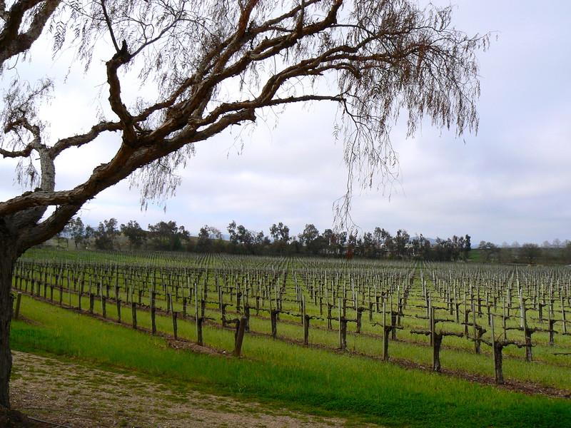 Gainey winery