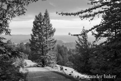 Mountain Pasture Road