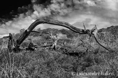 Torrey Pines Remainder