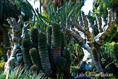 Pandoran Landscape - Huntington Gardens