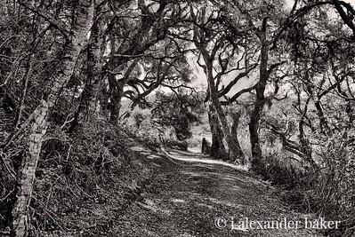 Oaken Path