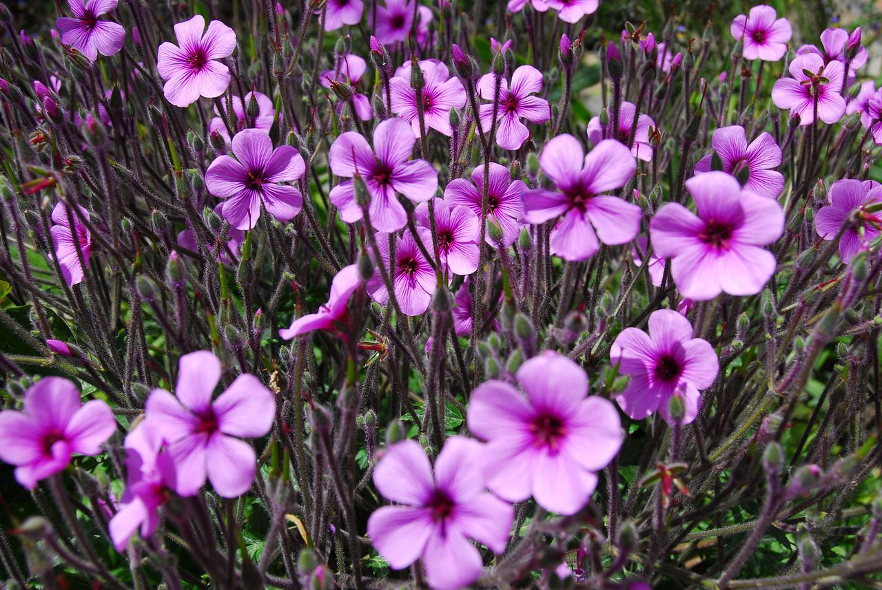 Beautiful flora in the Getty Center Garden - California