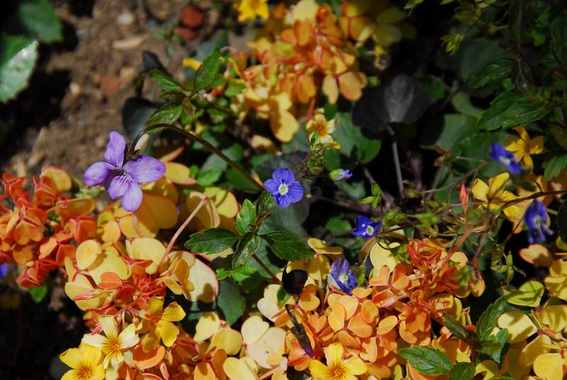 Colorful flora in the Getty Center Garden in California