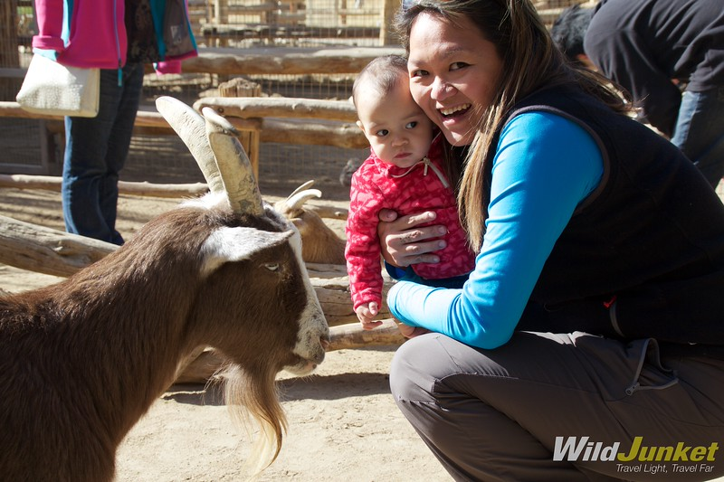 Petting zoo - quirky palm springs